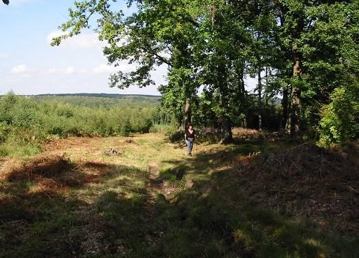 Dans les forêts d'Oignies