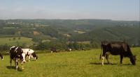 Rando découverte  à flanc de collines de l'Amblève et du Roannay