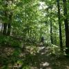 Randos en forêts : appel à la prudence !