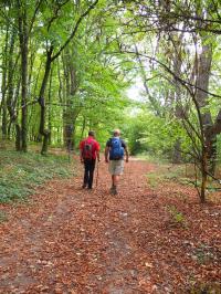 Le Belge francophone perçoit la forêt comme un sanctuaire à protéger