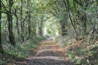 Balade entre bois et campagne aux Enneilles