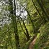 En Gaume, les sentiers forestiers à nouveau accessibles aux randonneurs
