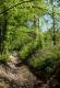 Dans les bois, près de Sauny.
