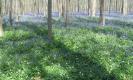 Dans le bois de Hal | RB Brabant wallon